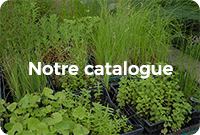 Encadré comportant différentes variétés de plantes vertes avec écrit dessus : Notre catalogue